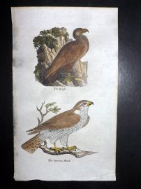 Simeon Shaw 1823 HCol Bird Print. The Eagle & Sparrow Hawk